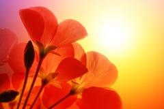 fleurit le rouge photos stock