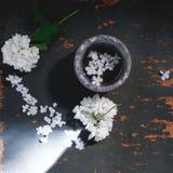 Fleurit un lilas sous forme de blanc de coeur Images libres de droits