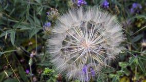 Fleurit unusal Photographie stock