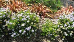 fleuron Photos libres de droits