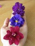 Fleurs à disposition Photos libres de droits