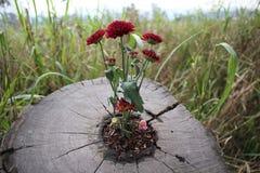 Fleurs à l'intérieur de tige d'arbre Photographie stock libre de droits