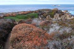 fleurs à la Côte Pacifique Photos stock
