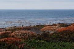 fleurs à la Côte Pacifique Images libres de droits