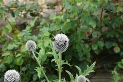 Fleurs à la Chambre de Harewood, Leeds, West Yorkshire, R-U Photographie stock libre de droits