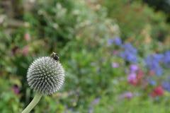 Fleurs à la Chambre de Harewood, Leeds, West Yorkshire, R-U Photo stock
