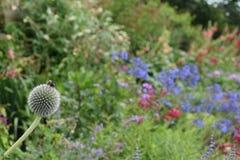 Fleurs à la Chambre de Harewood, Leeds, West Yorkshire, R-U Image libre de droits