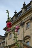 Fleurs à la Chambre de Harewood, Leeds, West Yorkshire, R-U Photographie stock