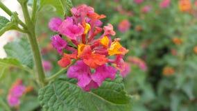 Fleurs à la ferme image stock