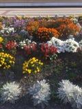 Fleurs à la gare ferroviaire photographie stock