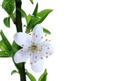 Fleurs à la première source Photos libres de droits