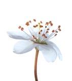 Fleurs à la première source photo stock