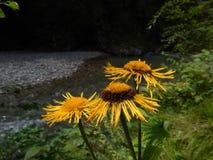 Fleurs à la rivière Photos libres de droits
