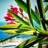 Fleurs à Monte Carlo Photographie stock libre de droits