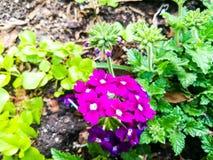 Fleurs à New York Etats-Unis Photographie stock