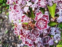 Fleurs à New York Etats-Unis Image stock
