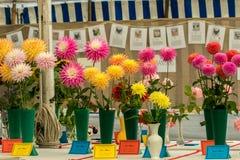 Fleurs à une exposition locale de village Photos stock