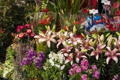 Fleurs à vendre au fleuriste Photo libre de droits