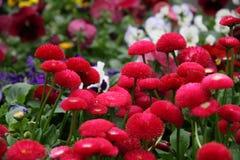 Fleurs à vendre en serre chaude d'un flo Image stock