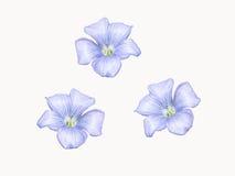 Fleurs élégantes Image libre de droits