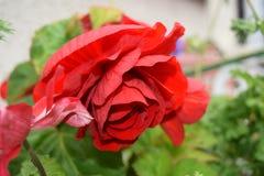 Fleurs étonnantes au parc local à Chester Image libre de droits