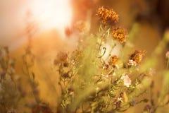Fleurs étonnantes de pré Photos libres de droits