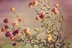 Fleurs étonnantes de pré Images stock