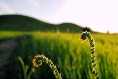 Fleurs étranges glorieuses Images stock