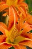 Fleurs Photo libre de droits