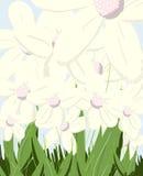 Fleurs ! Images libres de droits