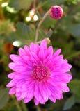 Fleurs. Image libre de droits