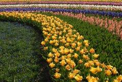 Fleurs 3 d'ampoule Image libre de droits