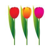 Fleurs. illustration libre de droits