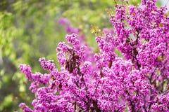 Fleurs Photographie stock