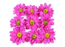 Fleurs. Images stock
