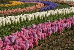 Fleurs 5 d'ampoule Photo libre de droits