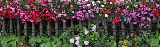 fleurs Photos stock