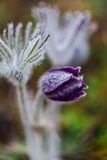 Fleurs Image libre de droits