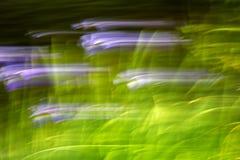 Fleurs abstraites d'effet de tache floue de mouvement Image stock