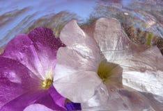 Fleurs abstraites de fond Photos libres de droits