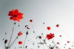 Fleurs abstraites de ressort Photos libres de droits