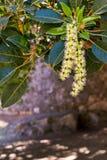 Fleurs abstraites sur un arbre Photographie stock