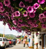 Fleurs accrochantes Photos stock