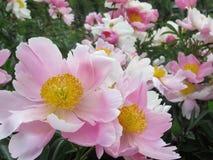 Fleurs aléatoires 2 de Pacifique Photos libres de droits