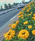 Fleurs alignées sur la rue Image stock