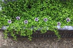 Fleurs amères d'herbe Image libre de droits