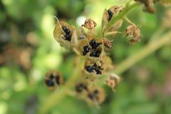 Fleurs anglaises de jardin de pays images stock