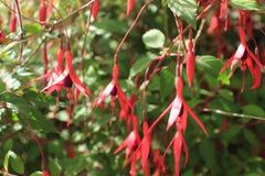 Fleurs anglaises de jardin de pays photographie stock