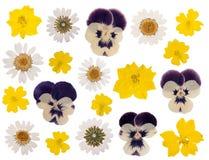 Fleurs appuyées photographie stock
