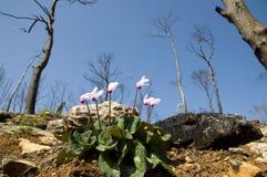 Fleurs après incendie Photos libres de droits